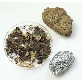 Owl Pellets - Medium Size 1""