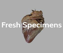 Fresh Specimens